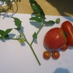 radionica upoznavanja sezonskog vrtnog povrća 16-8-2014